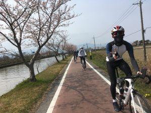 白鳥川の桜