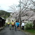 八幡堀の桜